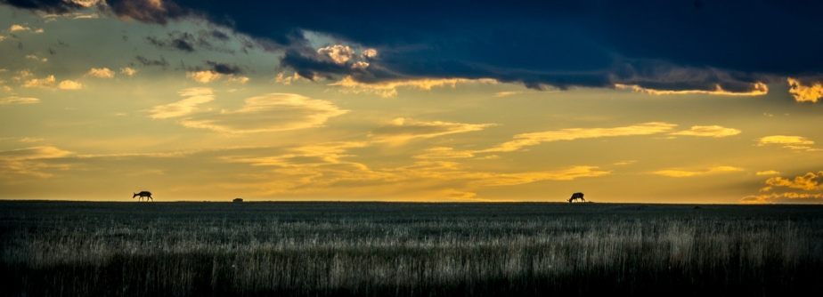 Antelope Sunset-2223